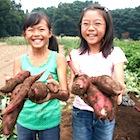 結局TPPで農業ビジネスはどうなるのか? を考えるための4本