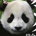 明るい話題が一転。赤ちゃんパンダ死亡で急落した銘柄ほか