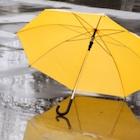 「軽トラ一台分も」台風の後、路上に捨てられビニ傘は誰が片付ける?