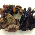 昆虫食、なぜ秘かなブームに?飲食店やイベントでも人気、栄養価高く美容効果も