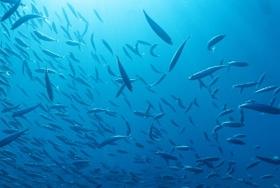 水産業、迫られる国内偏重から海外進出の戦略転換と、その経済効果~STAP騒動の問題点