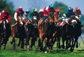 競馬の外れ馬券、経費として認められる?ギャンブルでの課税ルール策定の必要性も