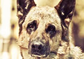 米で話題「犬を食べることについての議論」が深く考えさせられる ― なぜ、犬はダメなのか?