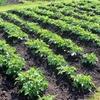 横浜市農業委員会、利権濫用・脅迫的行為で農家が被害 農地価値低下を招く行為も