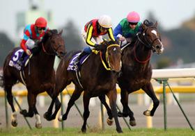 最高賞金の競馬、ジャパンC 万馬券的中連発、4大ネットワークに精通するサイトの情報