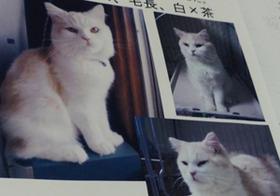 猫大量虐待?殺処分・遺棄横行か…動物実験や皮・肉の闇市場へ売却疑惑も