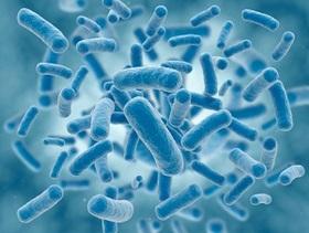 糞便移植で病気治癒?腸内細菌研究の衝撃 病気・肥満・認知症に多大な影響