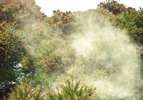 花粉症の原因は車の排気ガスだった!農村部より都会のほうが花粉症患者が多いワケ