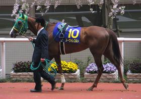 絶対的本命馬不在、混迷深まる春のG1 有力馬に不調やケガ相次ぐ 外国人騎手がカギ?