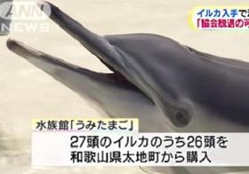 イルカ追い込み漁は残酷じゃない? だったらテレビはなぜ漁の詳細を報道しないのか