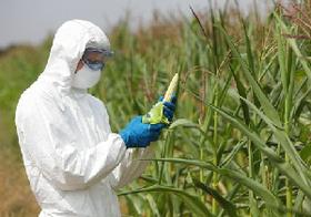 遺伝子組み換え作物は本当に危険? 世界有数の輸入国かつ消費大国日本はどうする?