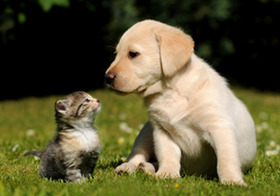 残酷な犬猫虐待が多発!下半身切り取り、性の対象、頭部に刃物刺す、エアガンで撃ち抜く…