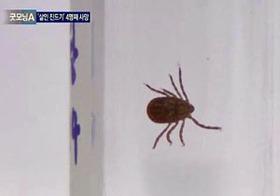 "MERS終息の兆しに沸く韓国で、新たな感染症が拡散中!? ""殺人ダニ""の正体とは"