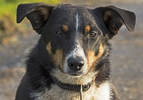 中国「犬肉祭り」1万匹以上犠牲か? 「残酷過ぎる」批判続出だが…