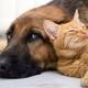 ペットを飼うのは動物虐待ではないか?自由を奪い、飼い主の勝手な都合で放り出し殺処分