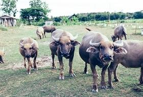危険な合成ホルモン剤残留牛肉、日本は大量輸入で野放し 発がんリスク、世界中で禁止