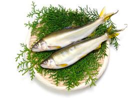 養殖魚、日本産でも違法薬物まみれ?中国産は異常な高濃度、人体に悪影響