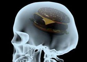 """ジャンクフードで脳の""""海馬""""が縮小 アルツハイマー病の発症リスクにも影響"""