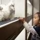 ペット用犬を狭いケージで糞尿処理せず乱繁殖、ショップで売れ残りは廃棄…ペット業界の闇