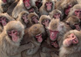アップル、ただの猿マネ企業?中国のディズニー「パクリ」テーマパークは極めて優れている
