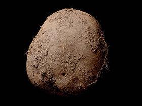 「1億円のジャガイモ写真」とソックリの「タマネギ写真」を撮ってみた結果…!