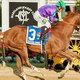 世界最強ダート馬のカリフォルニアクロームが今年度の引退撤回か 「現役強行」の理由は来年新設「ドリームレース」の超高額賞金