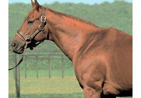 「最強世代」の『最強馬』無敗の皐月賞馬アグネスタキオンが駆け抜けた「神話」