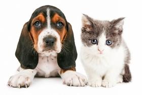 ペット猫の飼育数、激減の犬を逆転間近?手間のかからなさや費用安も原因か