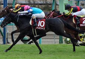 大阪杯の覇者アンビシャスが今年も中山記念(G2)から始動!王者ドゥラメンテに迫り強烈なインパクトを残した昨年とは異なる「環境」と「事情」