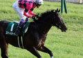 【徹底考察】日本ダービー(G1) スマートオーディン「スマートオーディンは『キズナ』になれるのか?2013年のダービー馬との『決定的な違い』とは」