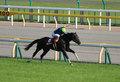 【徹底考察】日本ダービー(G1) ヴァンキッシュラン「歴代2位の好タイムだった青葉賞馬は『ジンクス』を打ち破れるか」