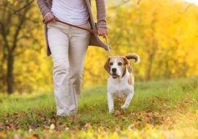 イヌを飼うと健康になれる!?イヌを飼っている中高年はBMIが低く、病院の受診率も低いと判明