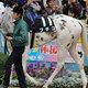 ブチコの弟シロニイはエピカリスに続けるか!? 白い馬体で新たなアイドル誕生へ?