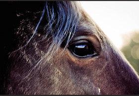 未完の大器・アンビシャスを先行馬に変えた「天才」横山典弘騎手。大胆不敵な奇策の「原点」は宝塚記念に