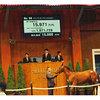 3億円で買った馬でその成績!?。セレクトセールはまさに別世界