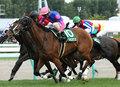 【クイーンS(G3)展望】オークス2着馬チェッキーノ&超良血馬ロッテンマイヤーが始動!負けられない古馬陣も豪華メンバーが集結