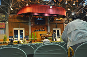 セレクトセール検討!ディープインパクト、ロードカナロア産駒、現役馬主も認めた「1億円超え」はこの17頭!
