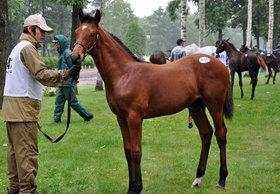 JRA「新若馬主」に熱視線!有吉弘行も驚愕の正体と競馬界の動き