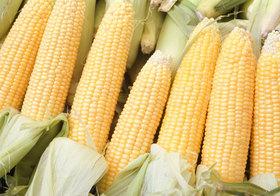 コンビニやスーパーの食用油・醤油は要注意!安全上不安な遺伝子組み換え作物使用の恐れ