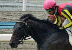 「今後も超楽しみ」浜中俊騎手が大絶賛!ドゥラメンテの従弟ヴァナヘイムがノーステッキでデビュー戦を圧勝!
