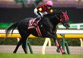 香港国際競走に日本からモーリスなど「G1級」馬13頭が出走!ハイランドリールら世界との力関係は
