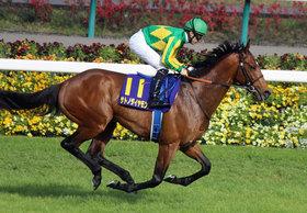 サトノダイヤモンド陣営に内紛? 次走は香港か有馬記念か、オーナーと生産者&調教師の「深い思惑」一致せず?