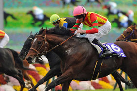 香港競馬もおまかせ!全G1レースの重賞穴馬データを緊急公開!