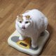 適正体重や理想体重、無意味で非科学的?日本の「肥満」の定義は厳しすぎる?