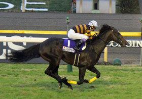 キタサンブラック堂々1位も「あの珍名馬」が大人気!?有馬記念のファン投票結果からわかる「今年の競馬事情」とは
