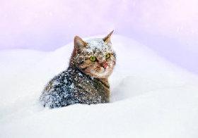 野良犬・野良猫に受難の冬! 「殺処分ゼロ」のドイツやイギリスは民間動物保護団体が活躍