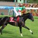 マリアライト引退。キタサンブラックとドゥラメンテを下したグランプリ牝馬のハイライト