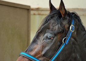 ジャスティファイが米三冠後に無念の引退......種牡馬としての価値は!?