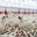 鳥インフルエンザ・ウイルス、「種の壁」を超え人間にパンデミック…一集団の渡り鳥から
