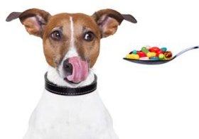 軟膏薬で犬5頭が死亡、キシリトール配合ガムで中毒死~忘れないで<ペットの目線>